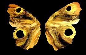 Butterfly - 150x150 cm